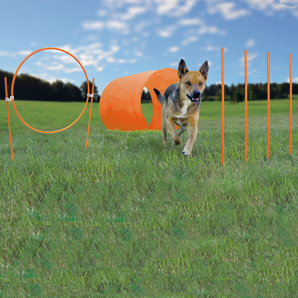 Outward Hound Zip & Zoom Outdoor Agility Kit